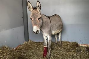 Junior, affidato all'Ippokampo Stable di Borgosatollo