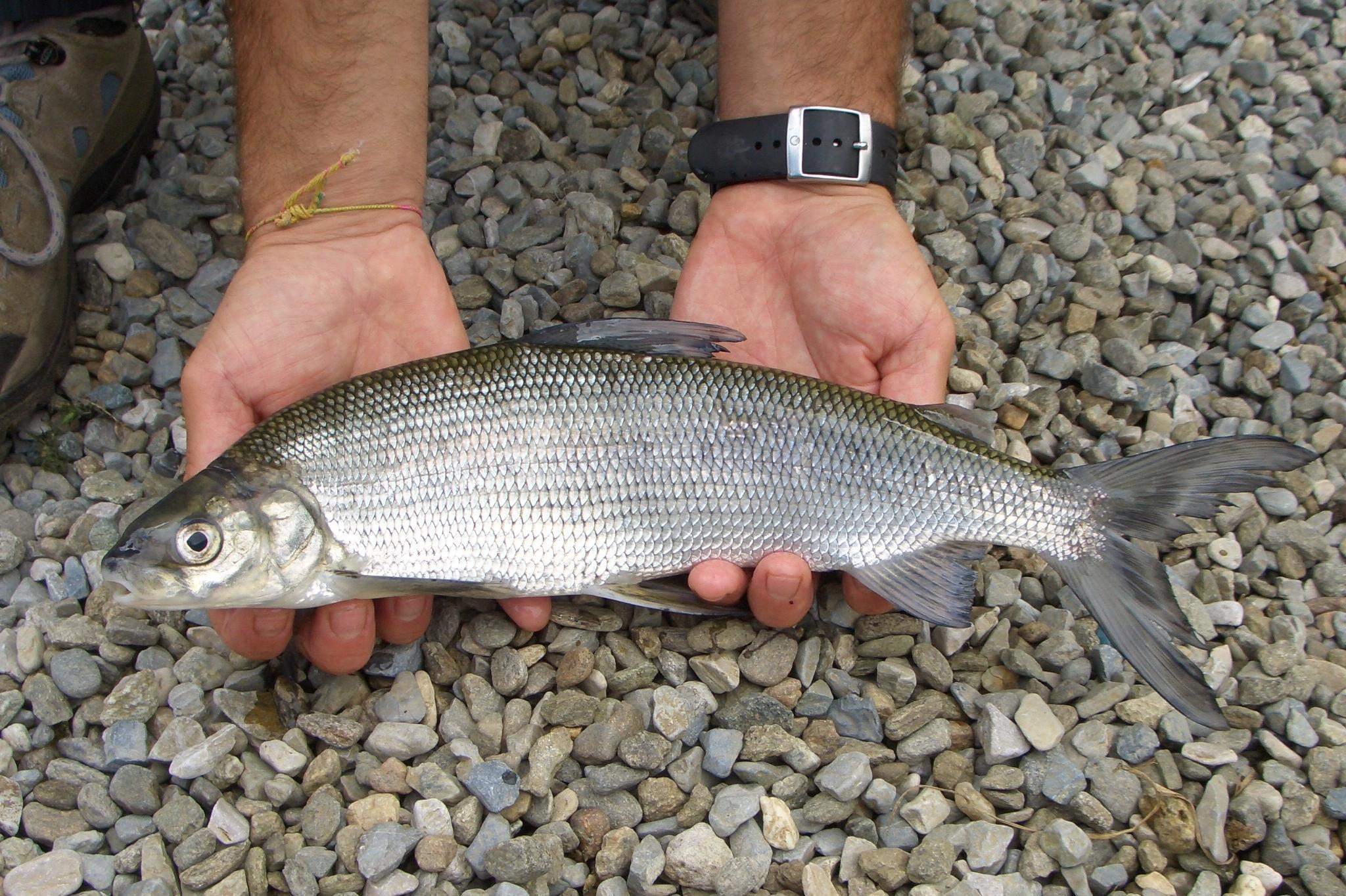 In Krasnodar che pesca in canali